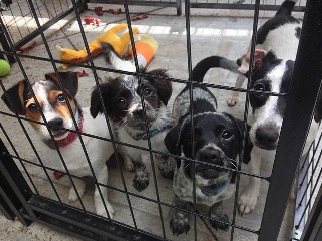 Just some of the dogs that are being taken care of at the shelter